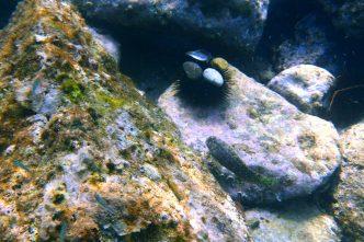 canovella snorkel